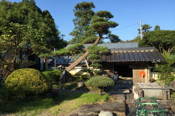 気分爽快!驚くほど巨大な庭にある沢山の松の剪定